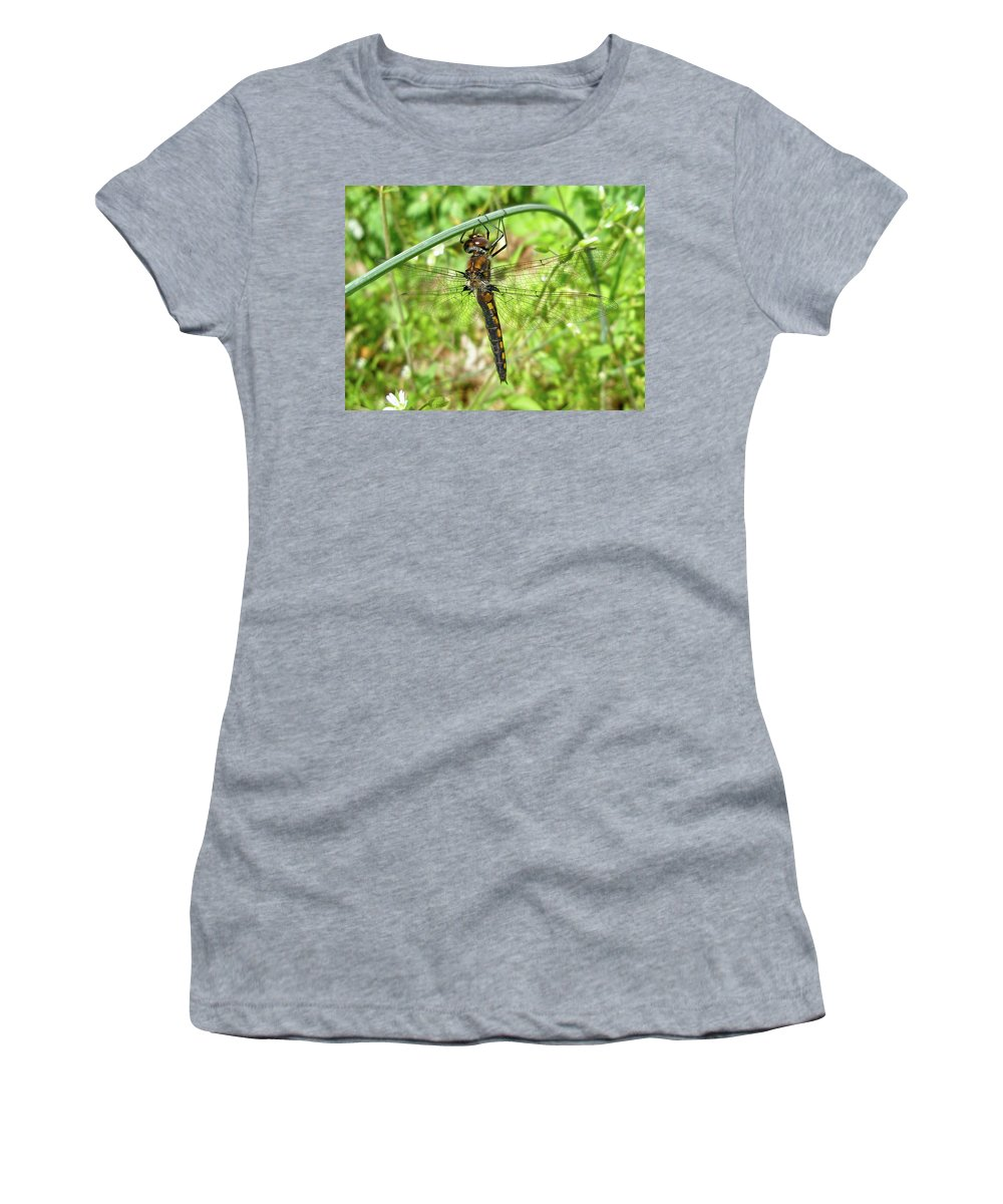Dragonfly Women's T-Shirt (Athletic Fit) featuring the photograph Resting Brown Dragonfly by Mother Nature
