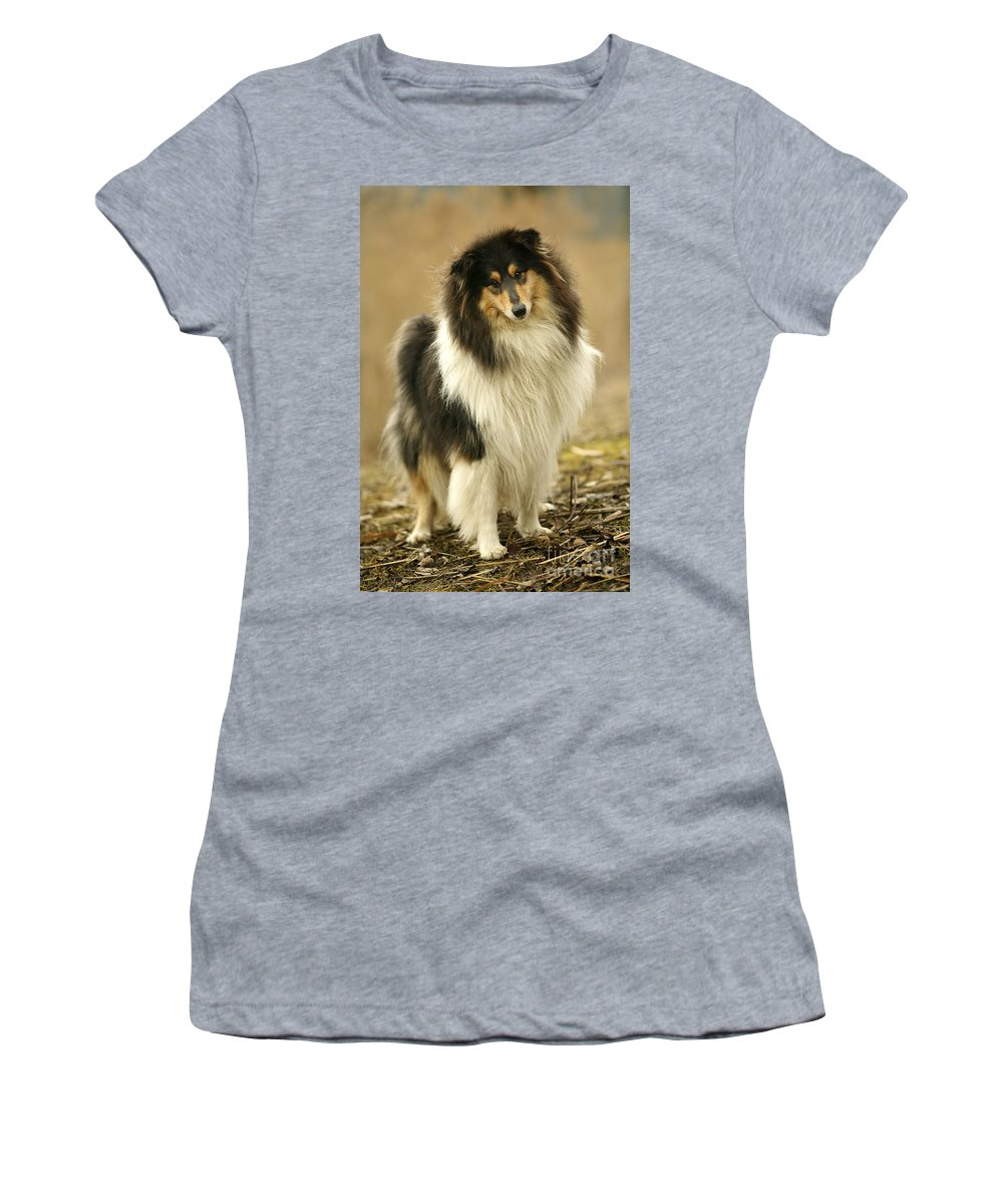 Rough Collie Women's T-Shirt (Athletic Fit) featuring the photograph Rough Collie Dog by Jean-Michel Labat