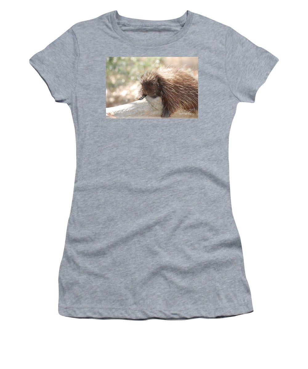 Porcupine Women's T-Shirt featuring the photograph Sleeping Porcupine by DejaVu Designs