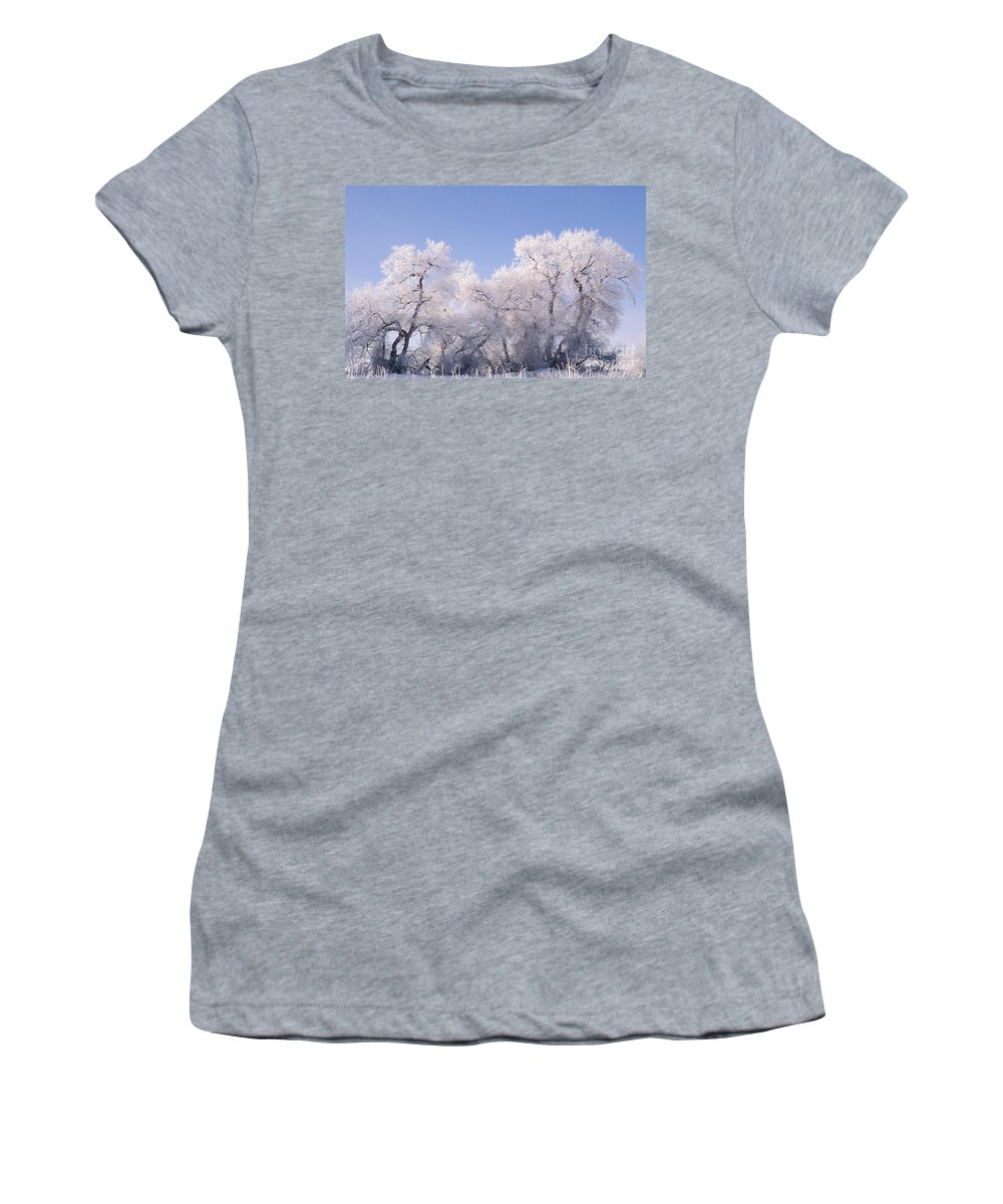 Plant Women's T-Shirt featuring the photograph Snow And Ice Blanket Cottonwood Trees by Ron Sanford