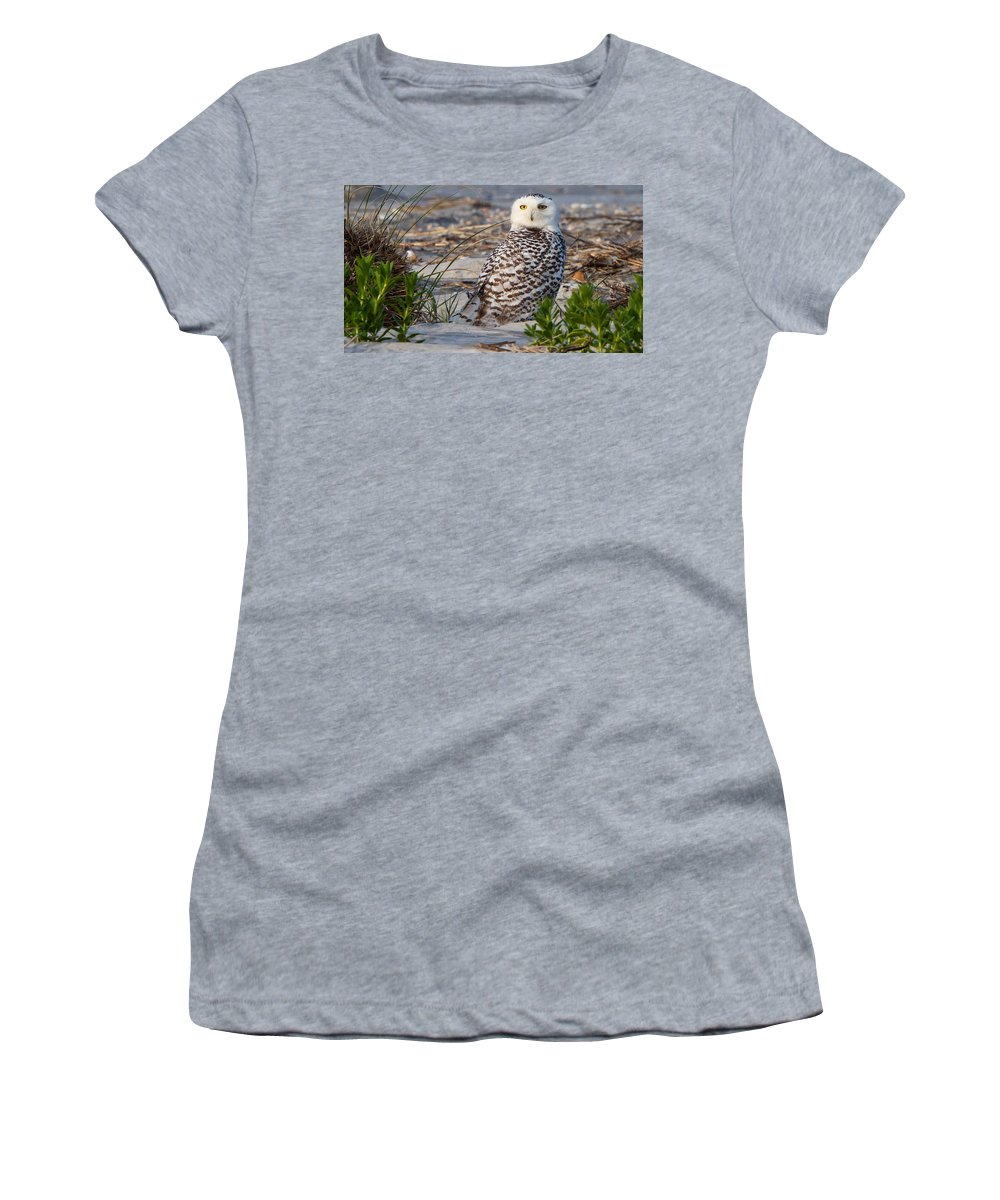Snowy Owl Women's T-Shirt featuring the photograph Snowy Owl In Florida 24 by David Beebe