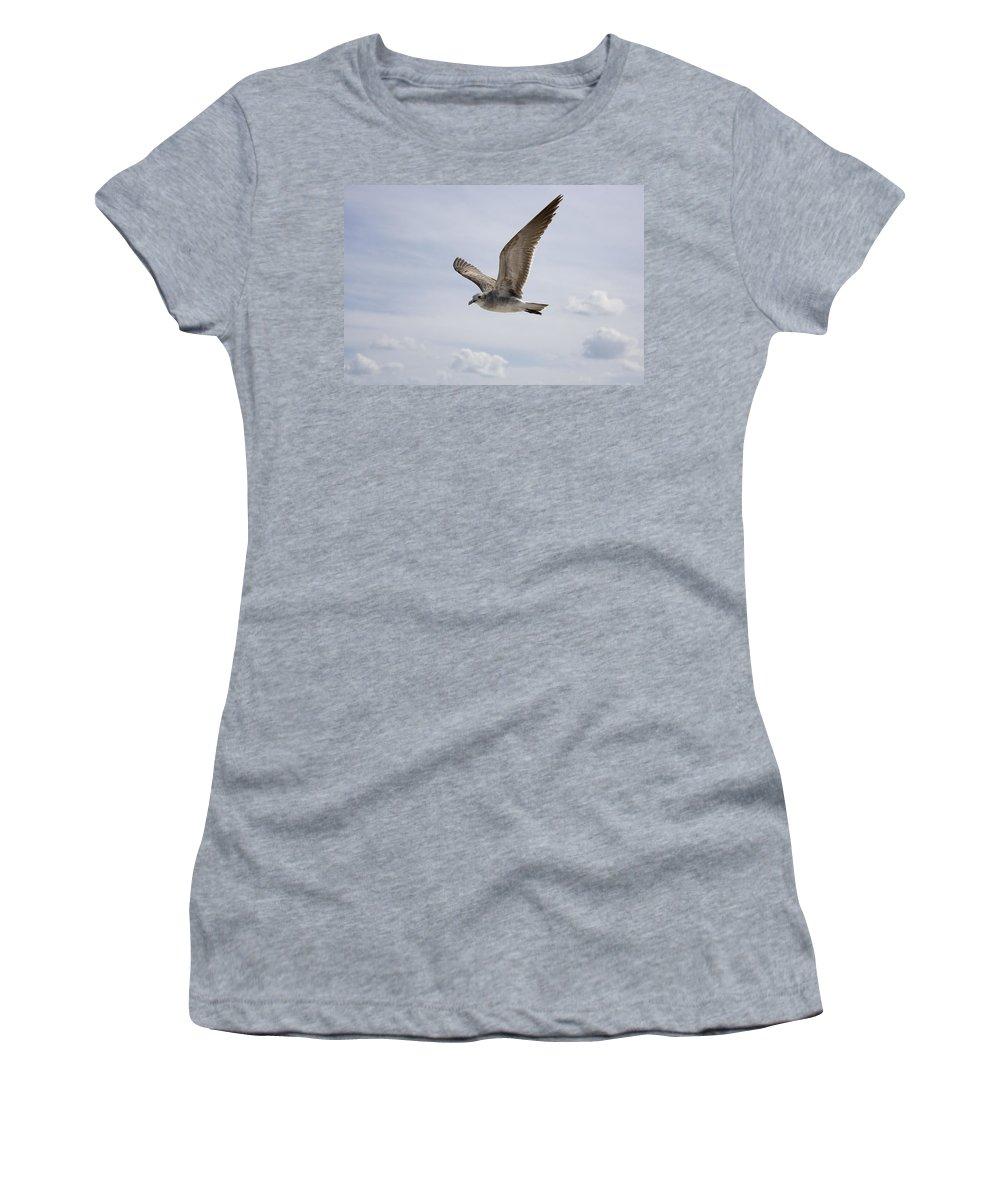 Seagull Women's T-Shirt featuring the photograph Soaring Gull by Daniel Murphy