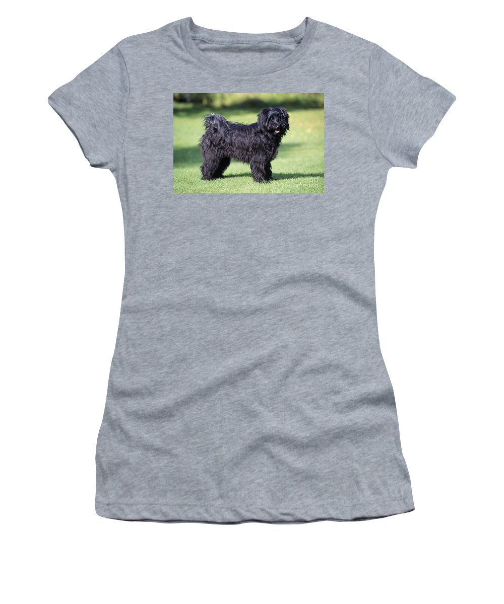Tibetan Terrier Women's T-Shirt (Athletic Fit) featuring the photograph Tibetan Terrier Dog Standing by John Daniels