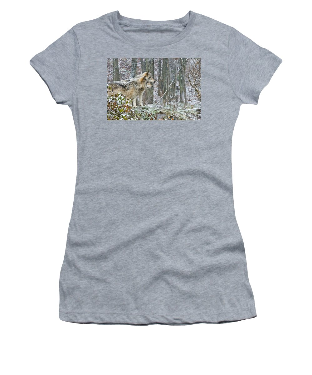 Timber Wolf Women's T-Shirt featuring the photograph Timber Wolf Pictures 184 by Wolves Only