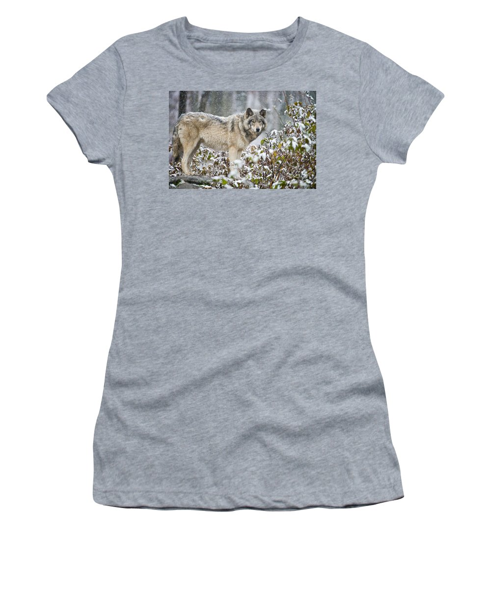 Timber Wolf Women's T-Shirt featuring the photograph Timber Wolf Pictures 187 by Wolves Only