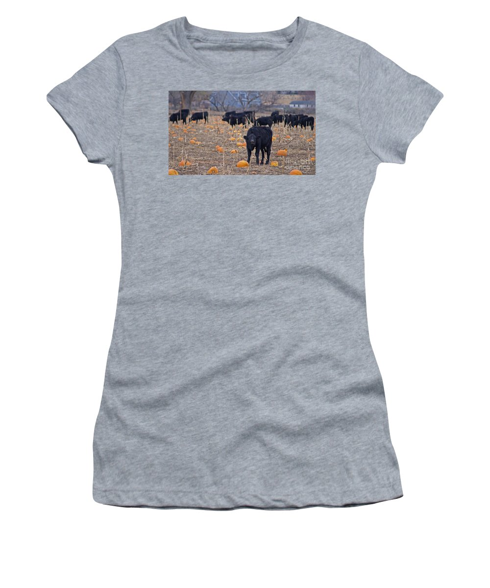 Cows Women's T-Shirt featuring the photograph Trick Or Treat Cows by Heather Coen
