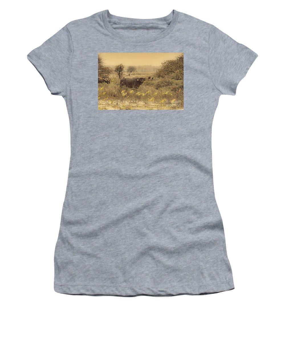 Water Buffalo Women's T-Shirt (Athletic Fit) featuring the photograph Water Buffaloes At Corroboree Billabong V2 by Douglas Barnard
