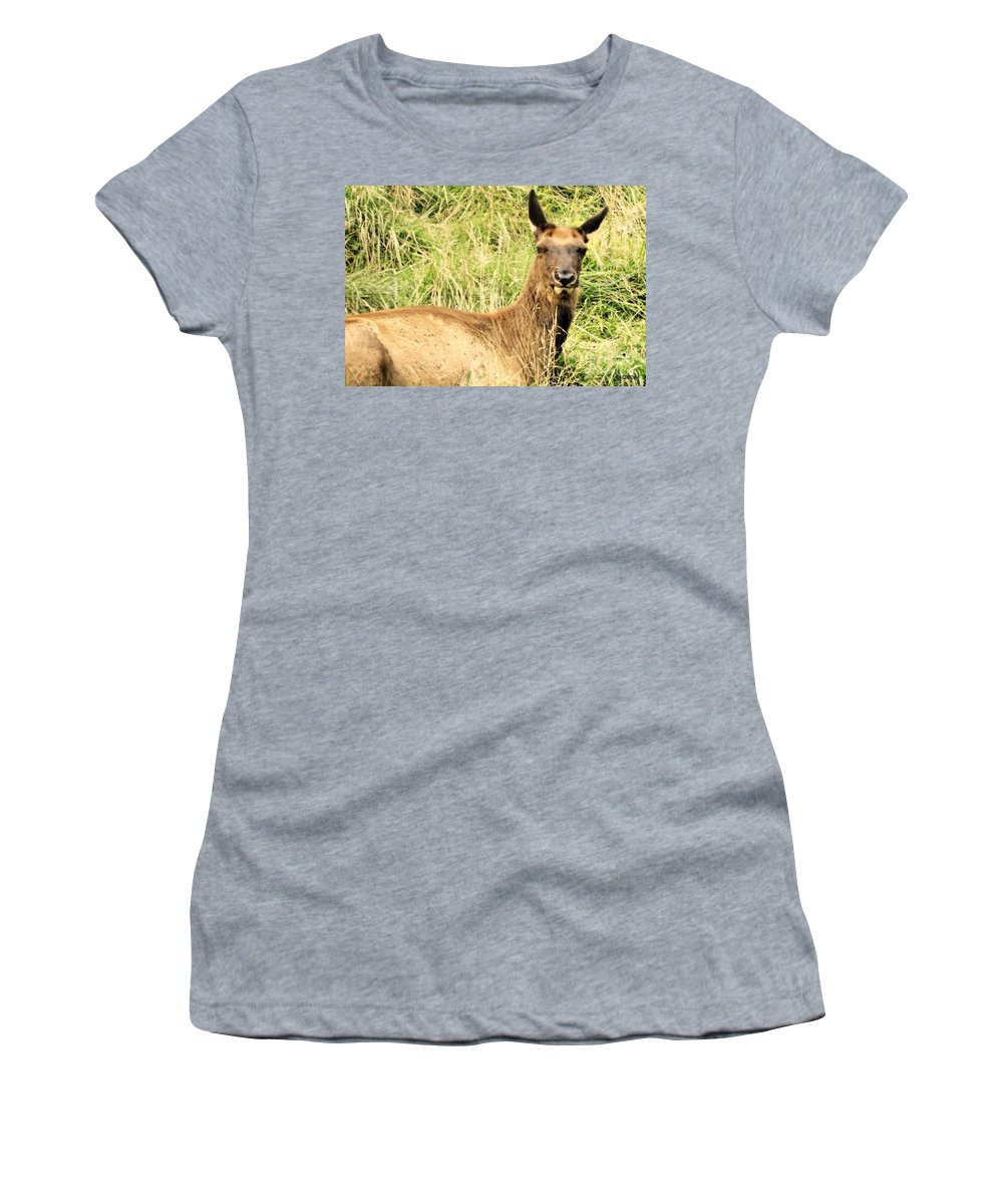 Elk Women's T-Shirt featuring the photograph Welcome To My World by Tami Quigley