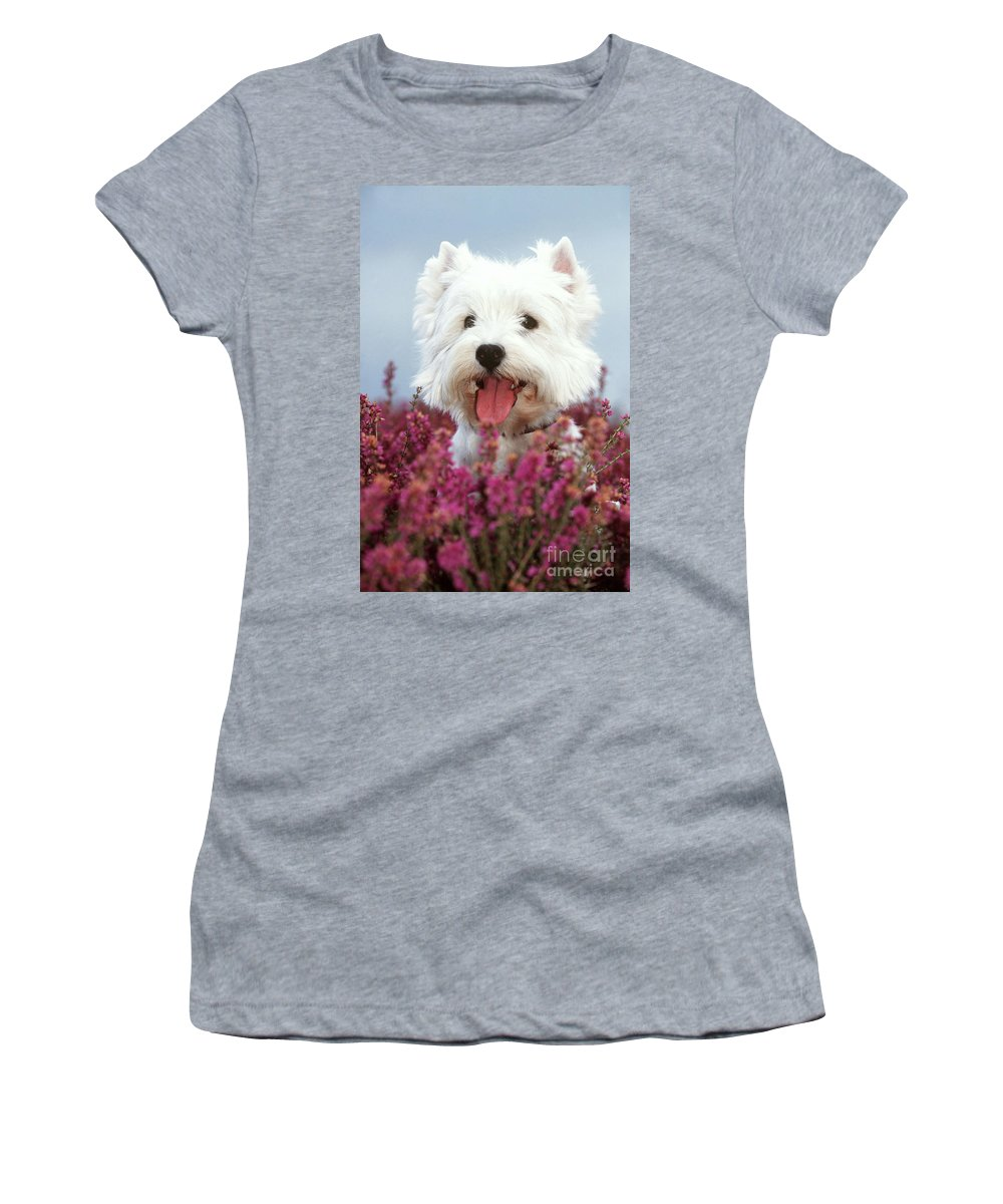 West Highland White Terrier Women's T-Shirt (Athletic Fit) featuring the photograph West Highland Terrier Dog In Heather by John Daniels