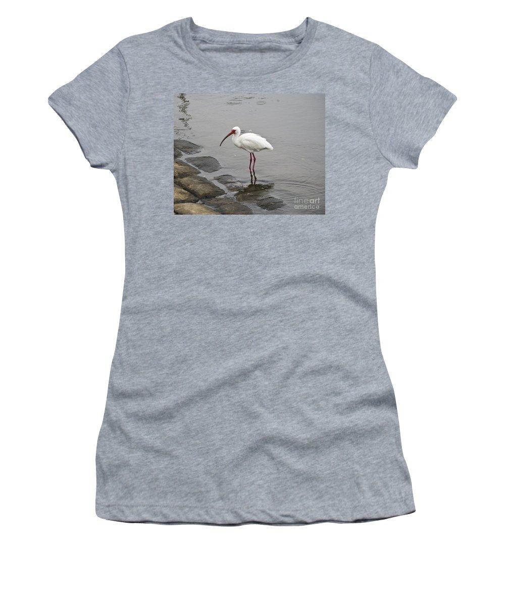 White Women's T-Shirt featuring the photograph White Ibis Eudocimus Albus by Allan Hughes