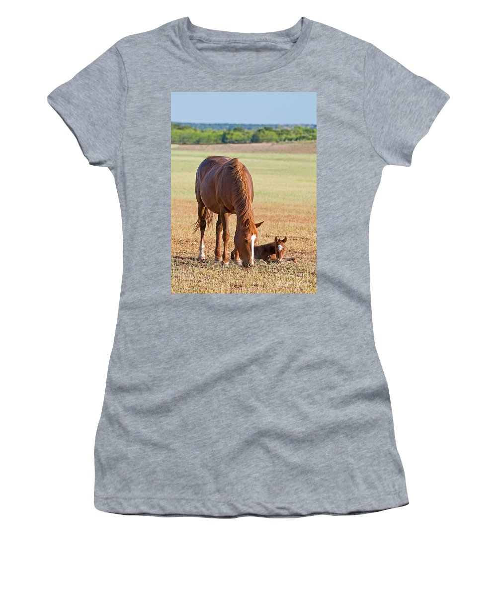 Nature Women's T-Shirt featuring the photograph Wild Horses Mother And Baby by Millard H. Sharp