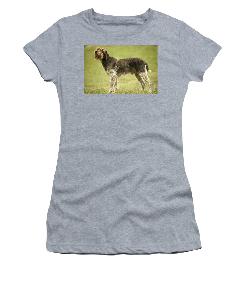 Wire-haired Pointing Griffon Women's T-Shirt (Athletic Fit) featuring the photograph Wirehaired Pointing Griffon by Jean-Michel Labat