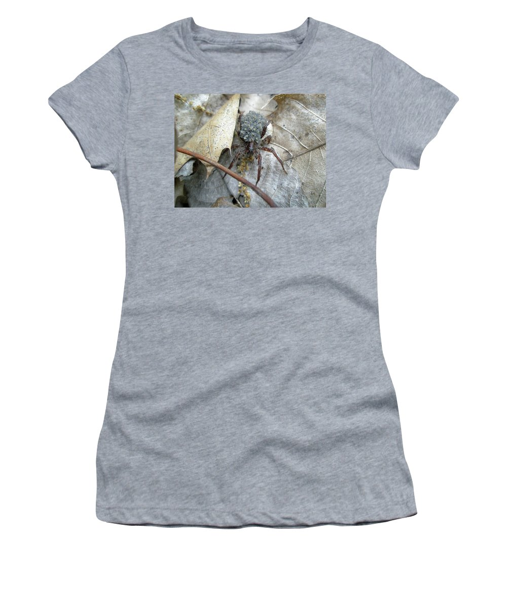 Spider Women's T-Shirt (Athletic Fit) featuring the photograph Wolf Spider And Spiderlings by Mother Nature