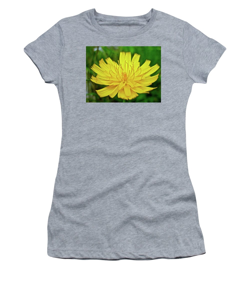 Hawkweed Women's T-Shirt (Athletic Fit) featuring the photograph Yellow Hawkweed - Hieracium Caespitosum by Mother Nature