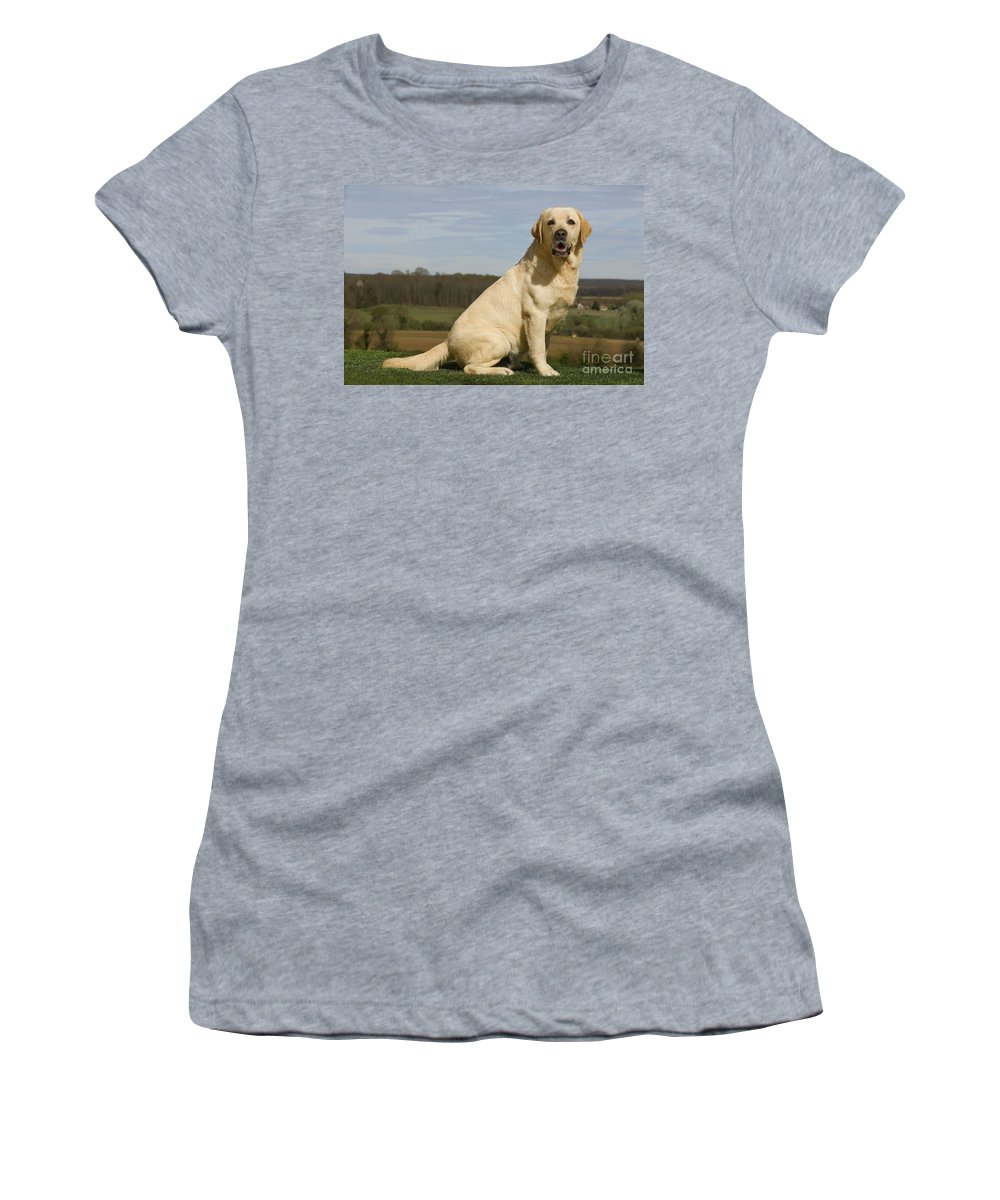 Labrador Retriever Women's T-Shirt (Athletic Fit) featuring the photograph Yellow Labrador Dog by Jean-Michel Labat