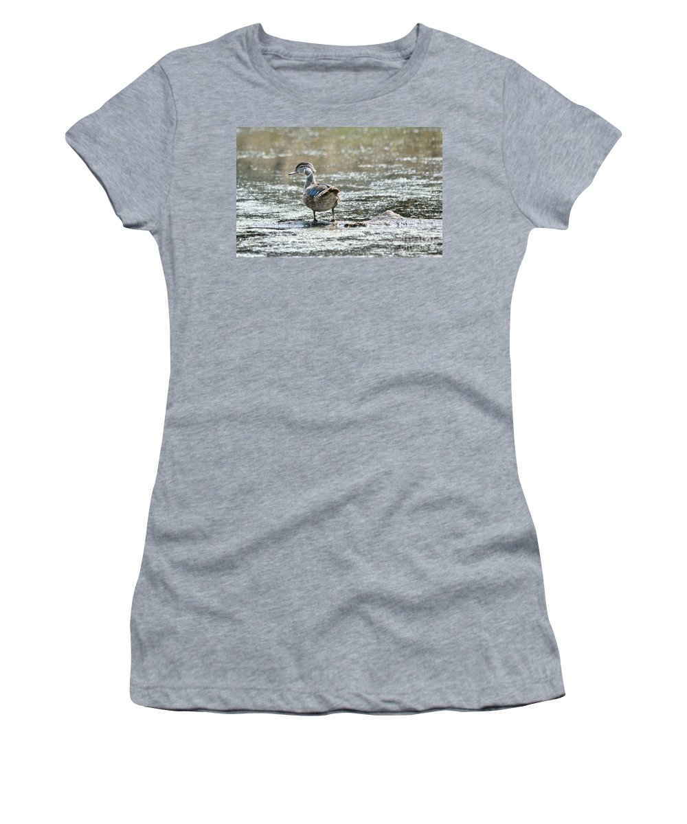 Wood Ducks Women's T-Shirt featuring the photograph Young Male Wood Duck by Cheryl Baxter