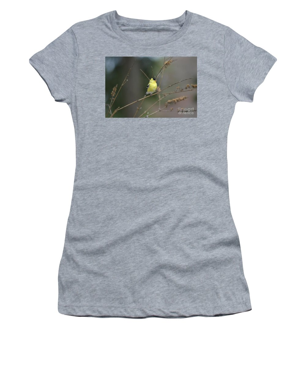Birds Women's T-Shirt featuring the photograph Yellow Finch by Living Color Photography Lorraine Lynch