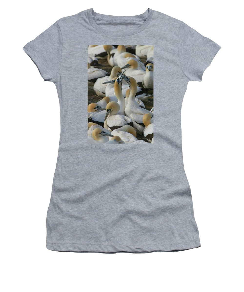Gannet Women's T-Shirt (Athletic Fit) featuring the photograph Cape Gannets by Bruce J Robinson