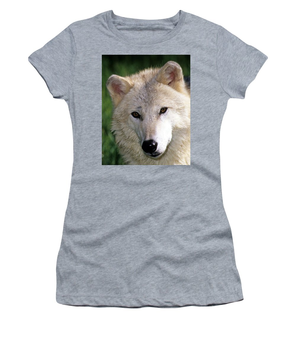 Gray Wolf Women's T-Shirt featuring the photograph Gray Wolf Face by Larry Allan