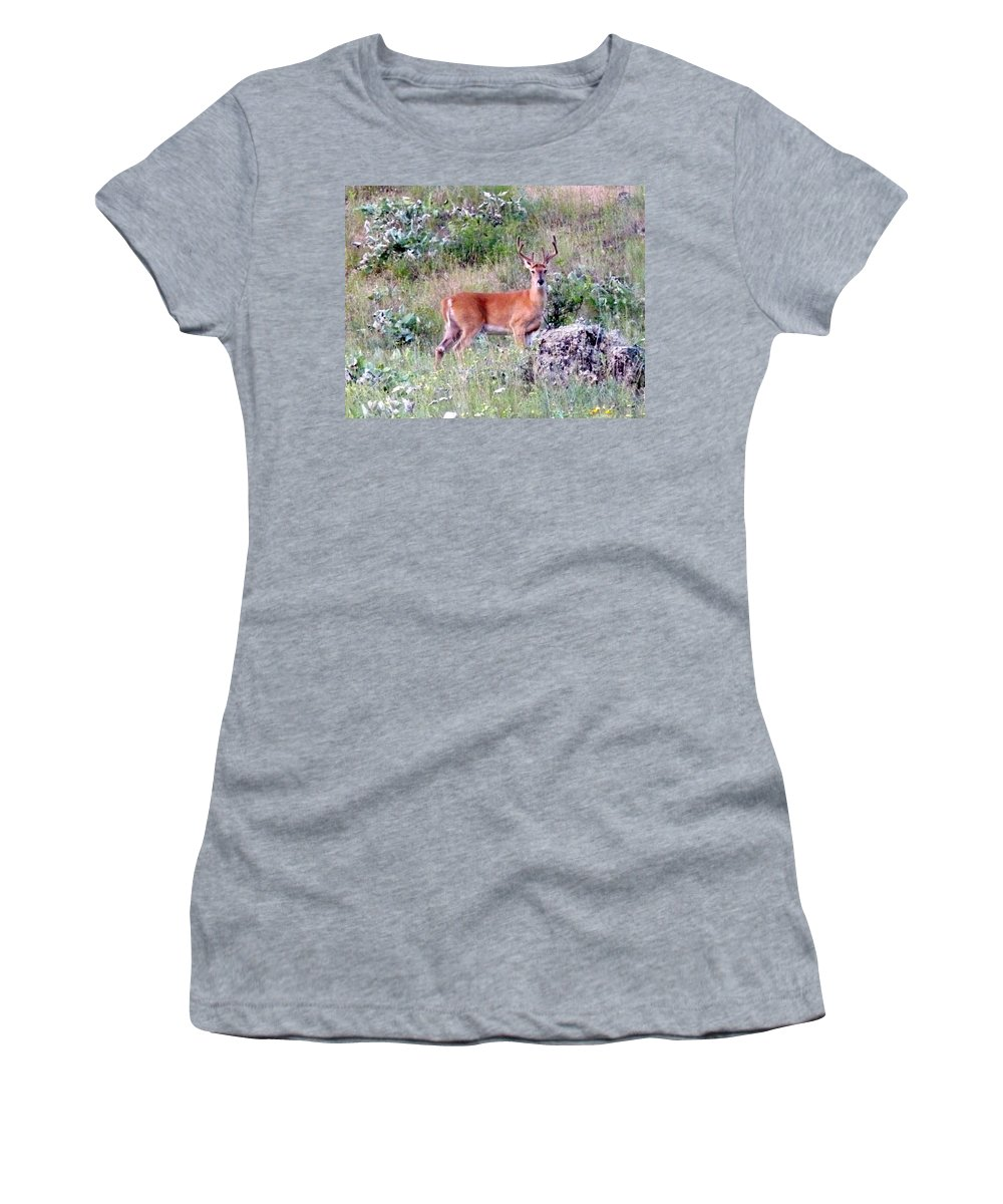 Deer Women's T-Shirt featuring the photograph Lake Country Buck by Will Borden