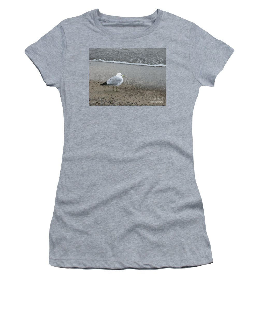 Ring-billed Gull Women's T-Shirt (Athletic Fit) featuring the photograph Ring-billed Gull by Ann Horn