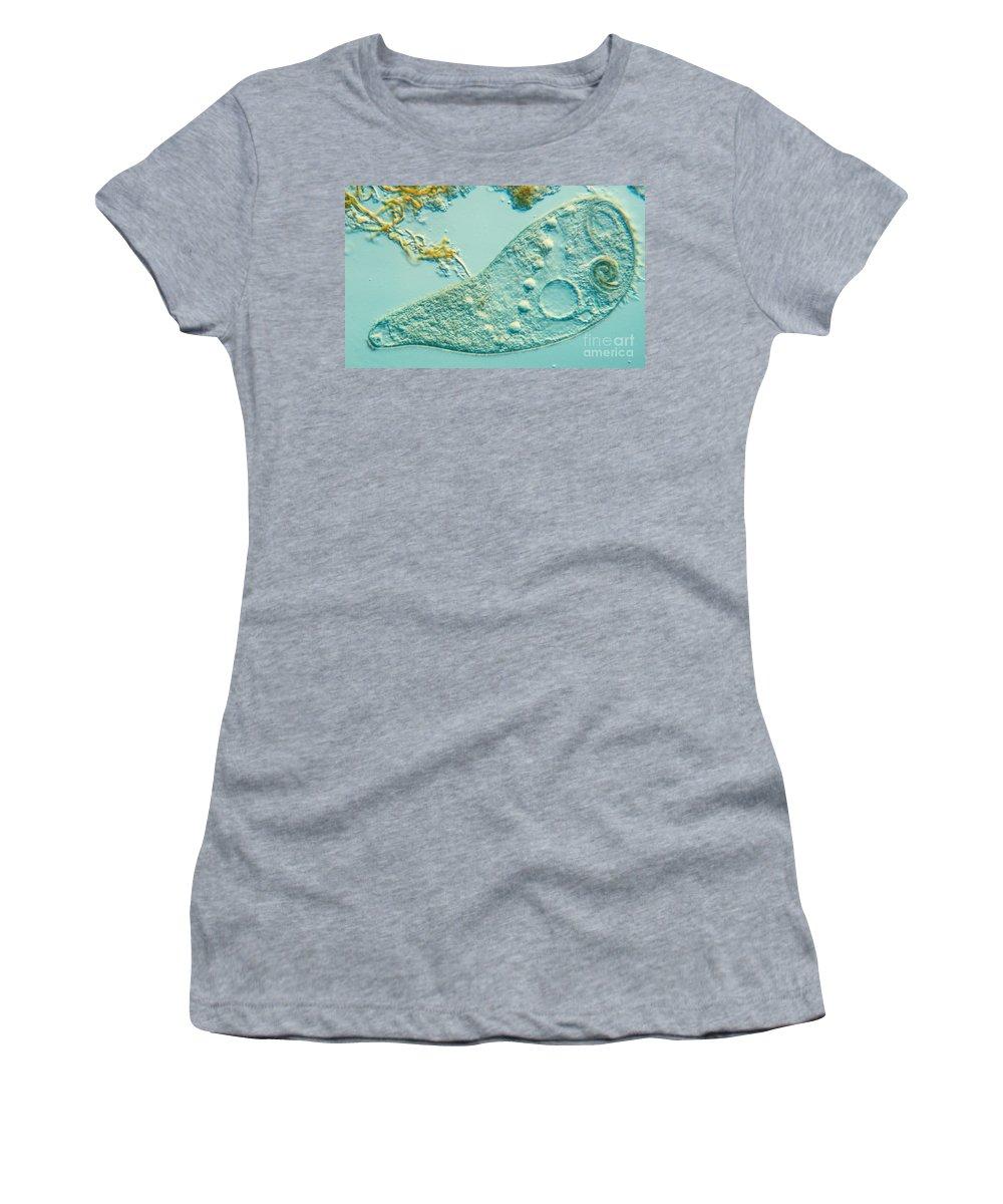Stentor Coeruleus Women's T-Shirt featuring the photograph Stentor Coeruleus by M. I. Walker