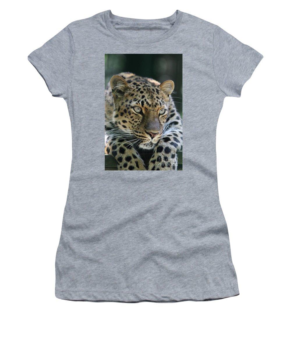 Amur Leopard Women's T-Shirt featuring the photograph Amur Leopard #2 by Judy Whitton