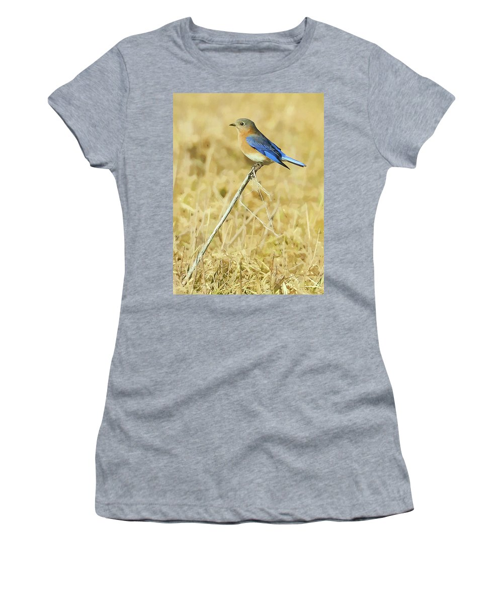 Bluebird Women's T-Shirt (Athletic Fit) featuring the photograph Bluebird In February by William Jobes