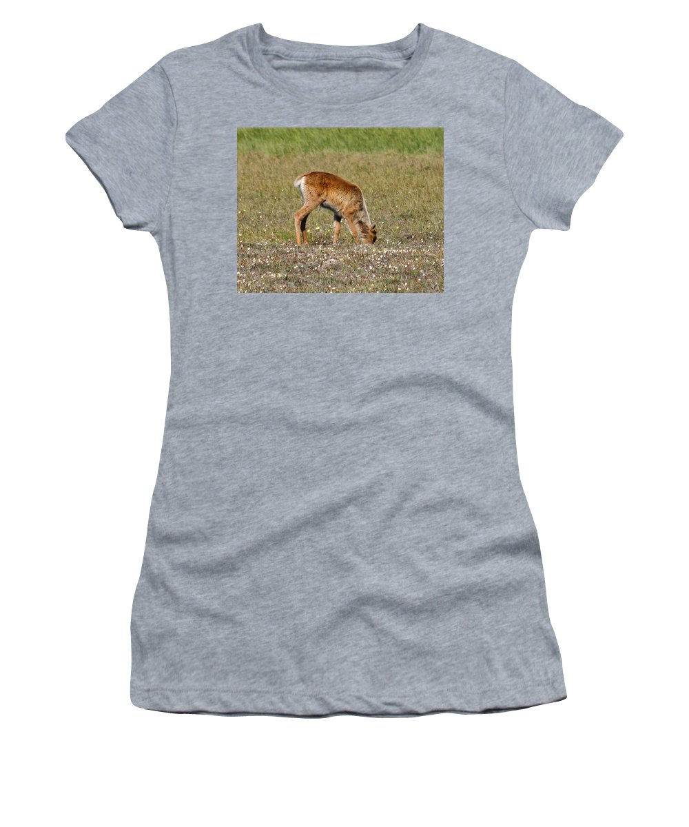Deer Women's T-Shirt (Athletic Fit) featuring the photograph Caribou Fawn by Anthony Jones