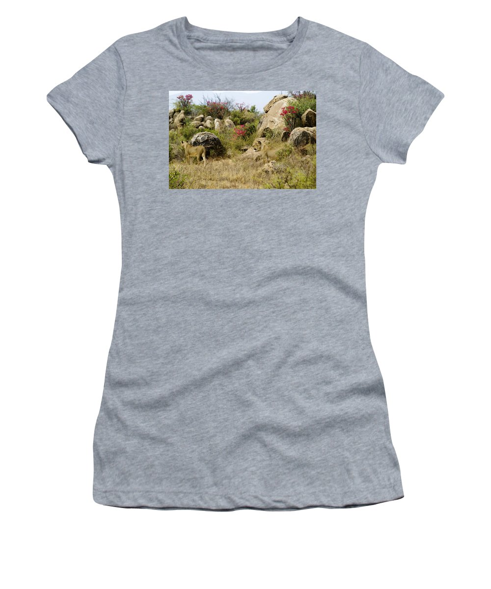 Lion Women's T-Shirt featuring the photograph Hunting Lionesses by Michele Burgess