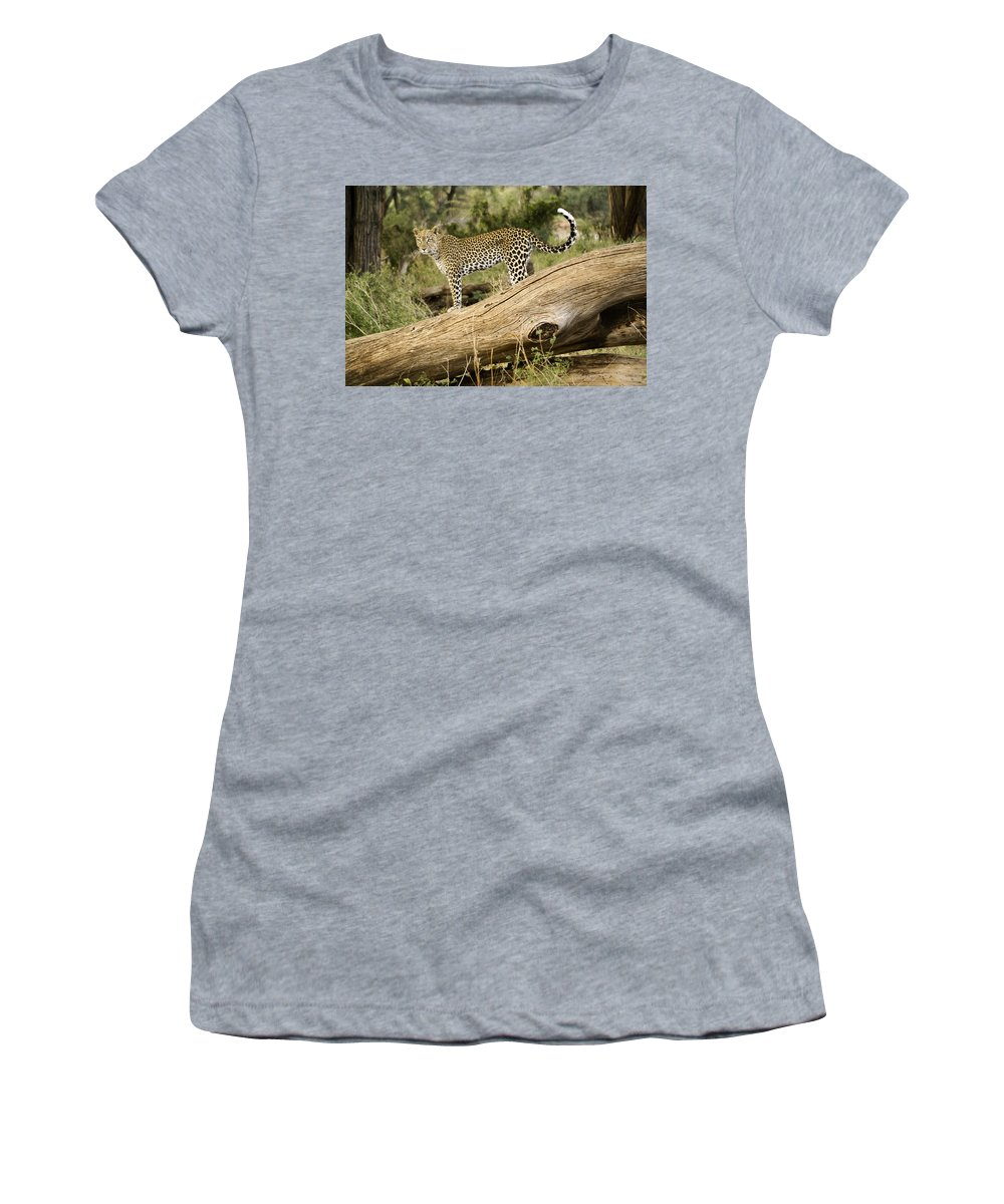 Africa Women's T-Shirt featuring the photograph Leopard In The Forest by Michele Burgess
