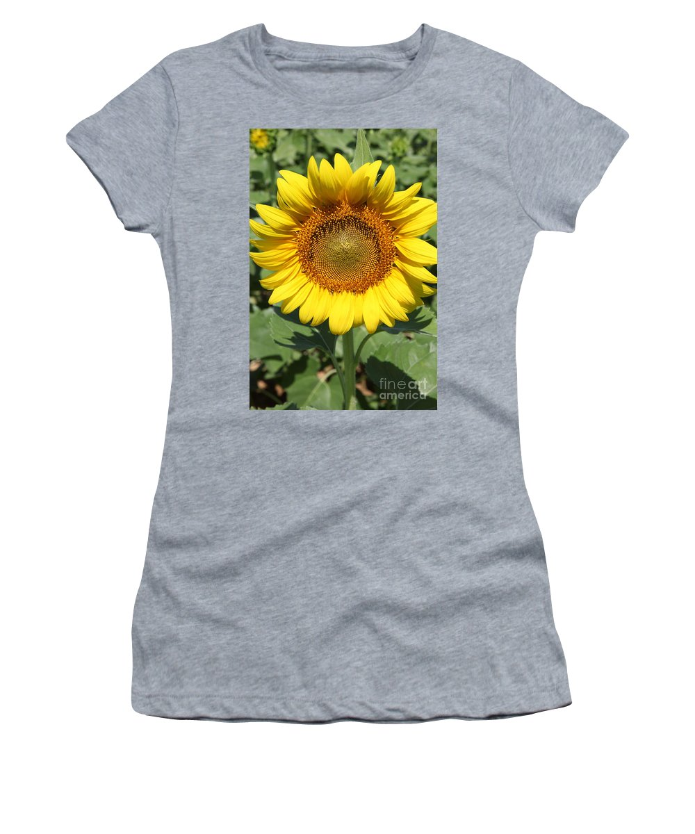 Sunflowers Women's T-Shirt (Athletic Fit) featuring the photograph Sunflower 09 by Amanda Barcon