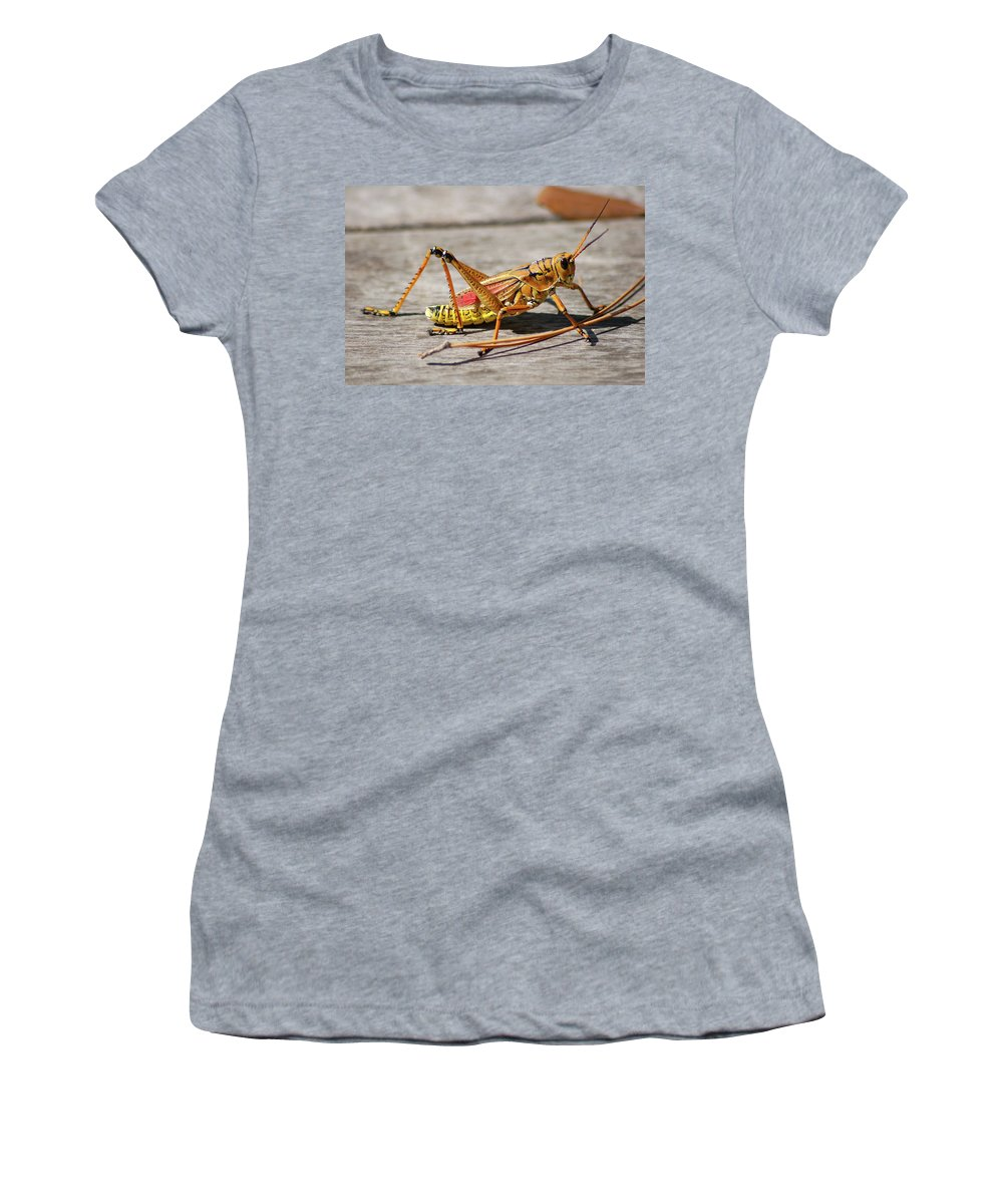 Lubber Grasshopper Women's T-Shirt (Athletic Fit) featuring the photograph 10- Lubber Grasshopper by Joseph Keane