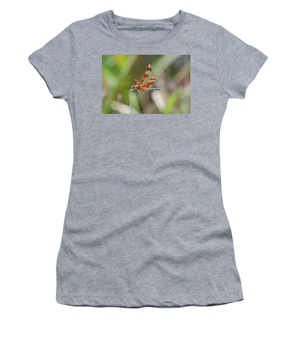 Nature Women's T-Shirt (Athletic Fit) featuring the photograph Dragon Fly by Rob Hans