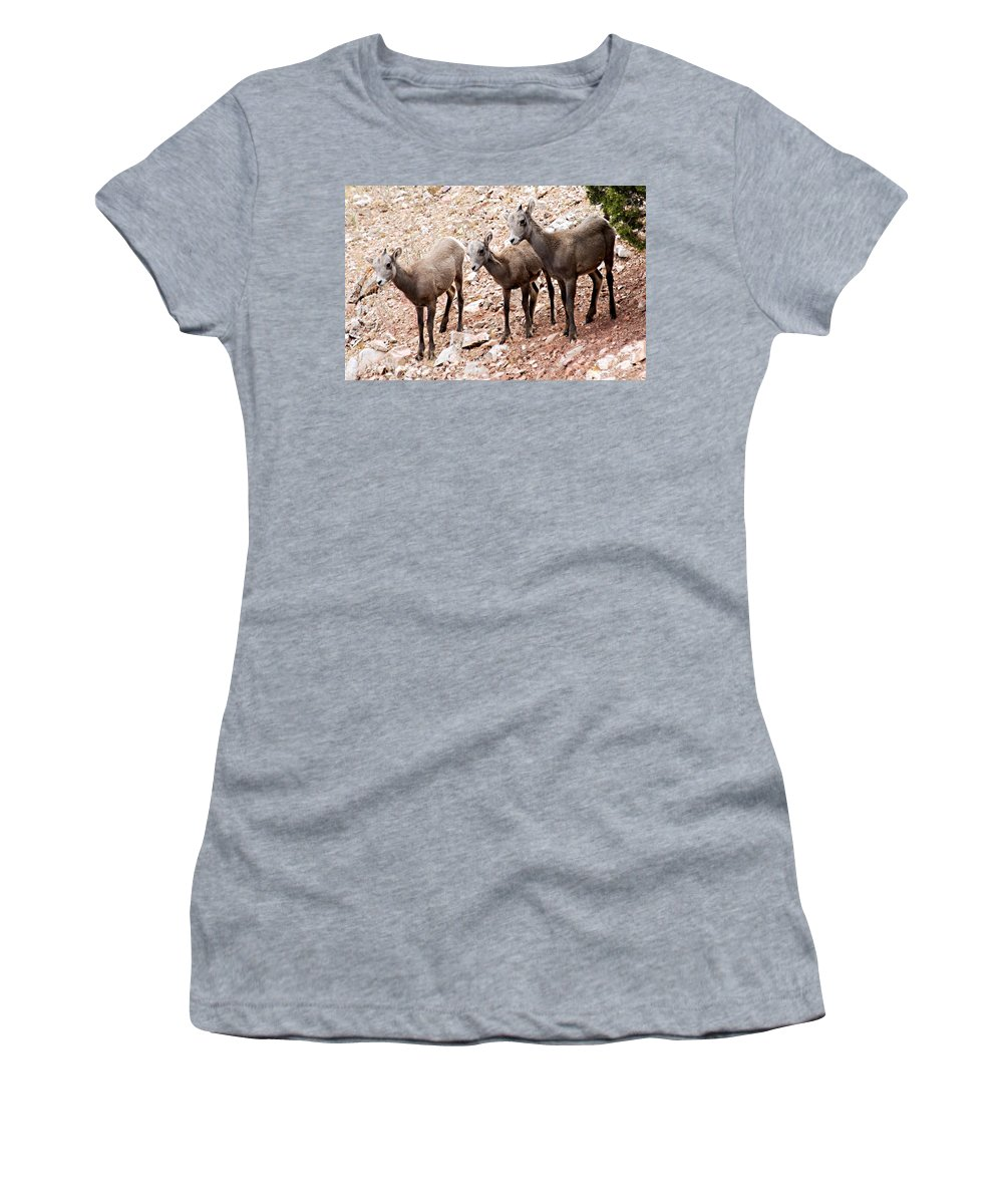 Bighorn Canyon National Recreation Area Women's T-Shirt (Athletic Fit) featuring the photograph 3 Little Lambs by Larry Ricker
