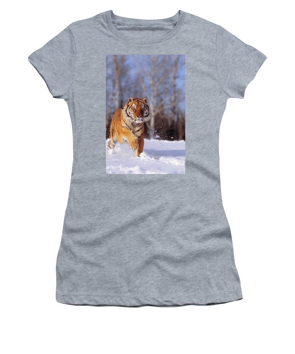 Afternoon Women's T-Shirt (Athletic Fit) featuring the photograph Siberian Tiger by John Hyde - Printscapes