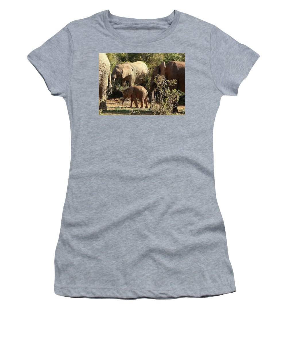 Elephant Women's T-Shirt featuring the photograph Addo Elephant Family by Jennifer Wheatley Wolf