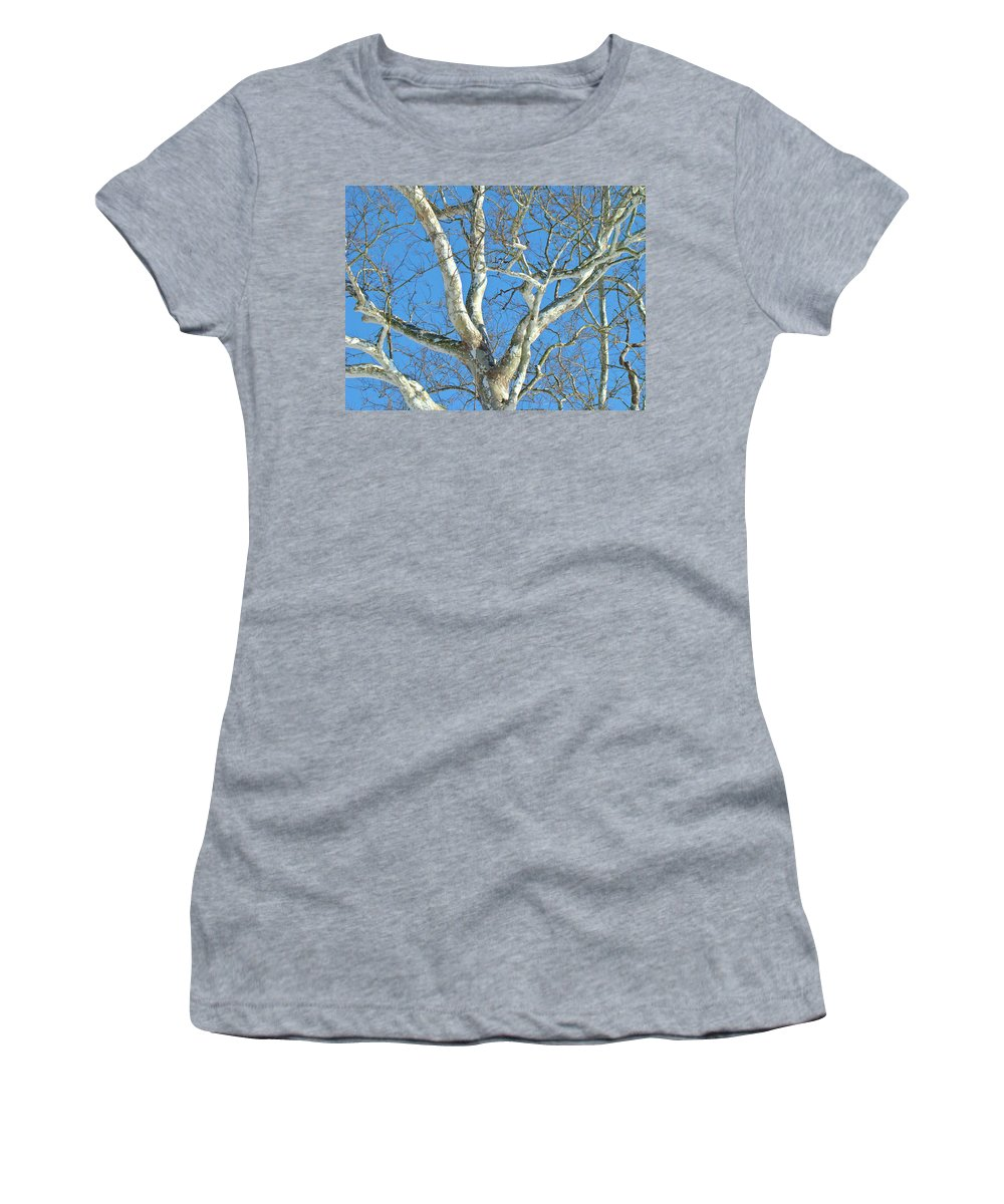Sycamore Women's T-Shirt (Athletic Fit) featuring the photograph American Sycamore - Platanus Occidentalis by Mother Nature