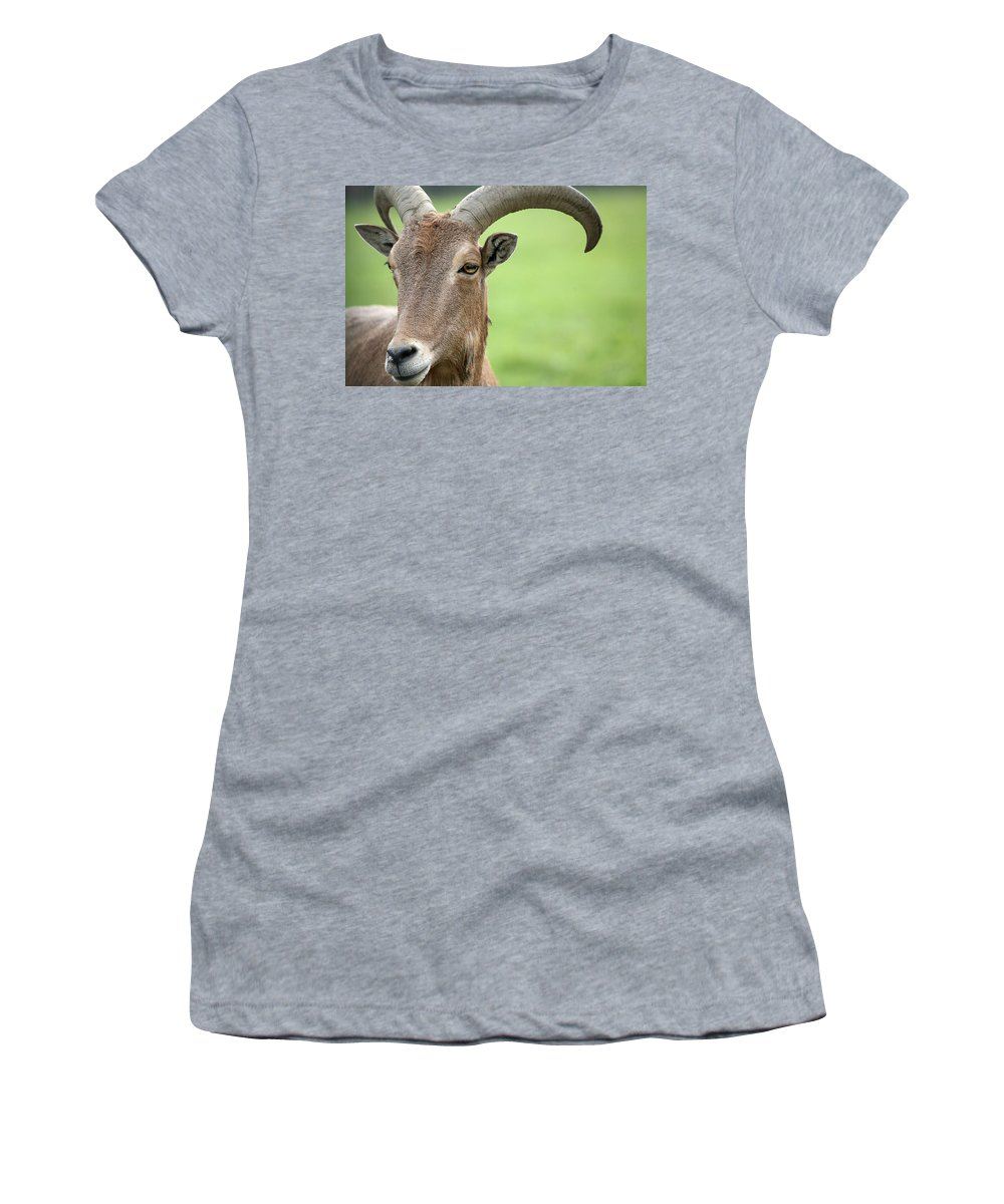 Aoudad Women's T-Shirt featuring the photograph Aoudad by Karol Livote