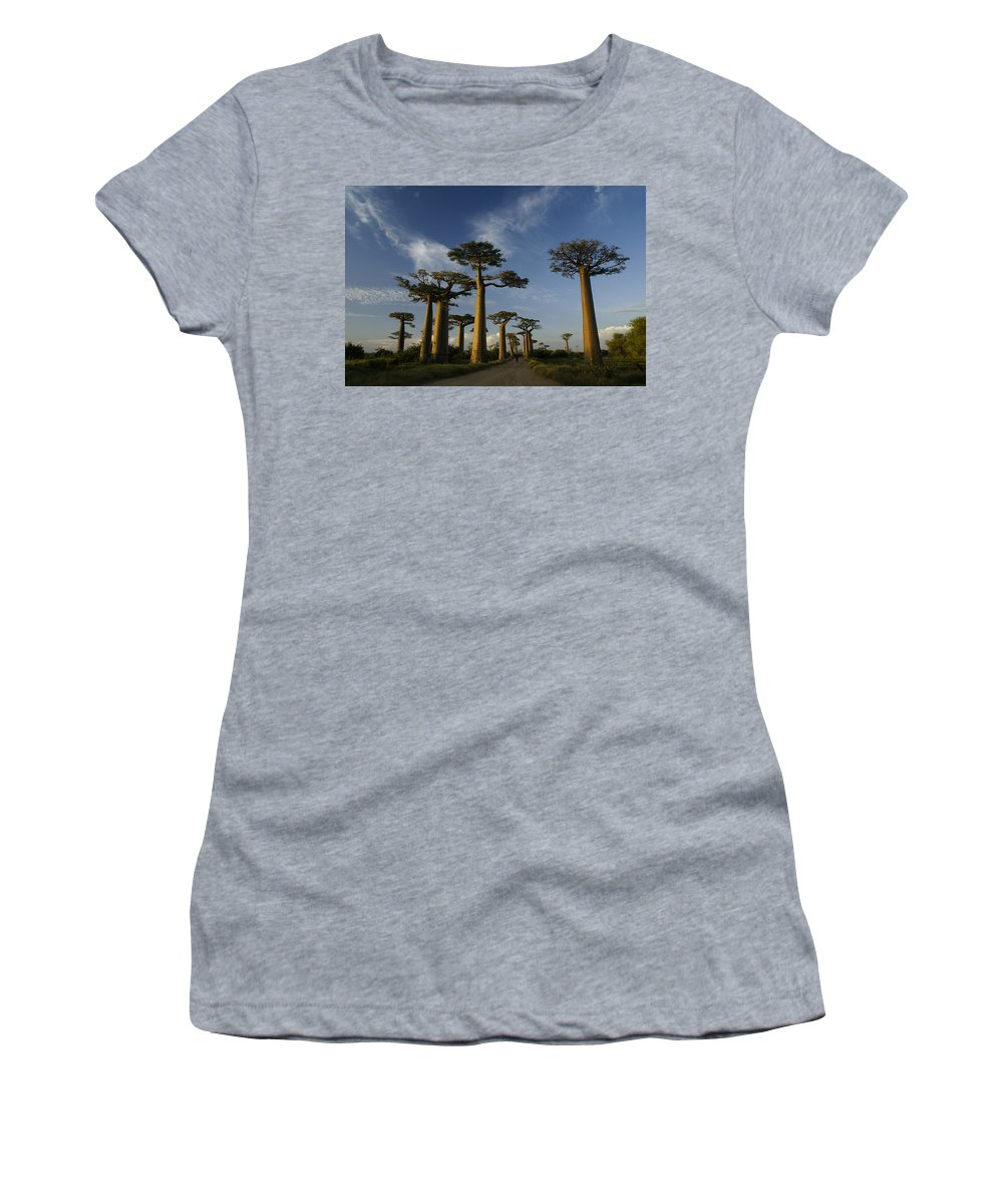 Madagascar Women's T-Shirt (Athletic Fit) featuring the photograph Avenue Des Baobabs by Michele Burgess