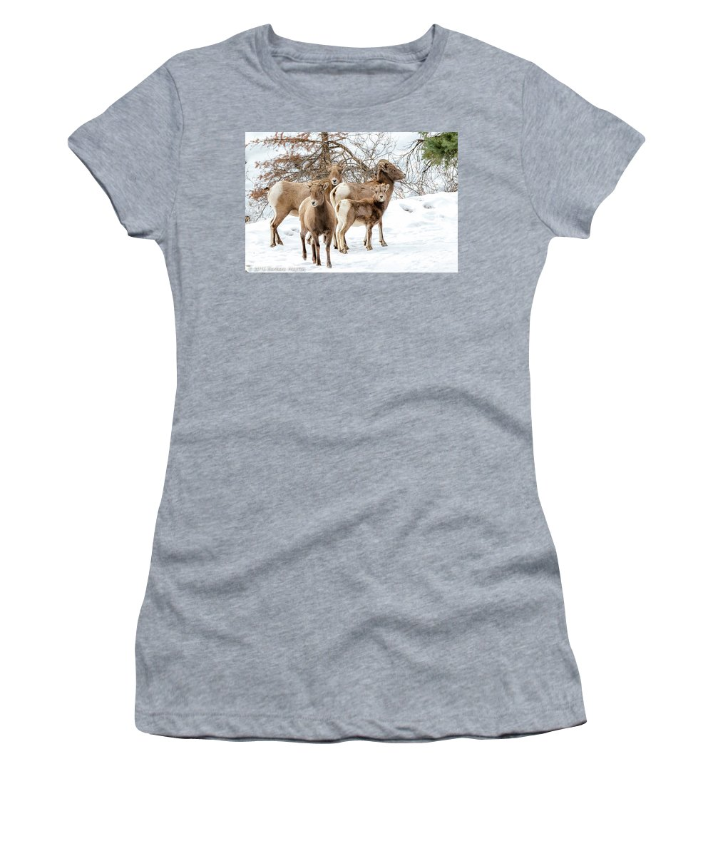 Perimeter Trail Women's T-Shirt (Athletic Fit) featuring the photograph Band Of Big Horns by Barbara Hayton