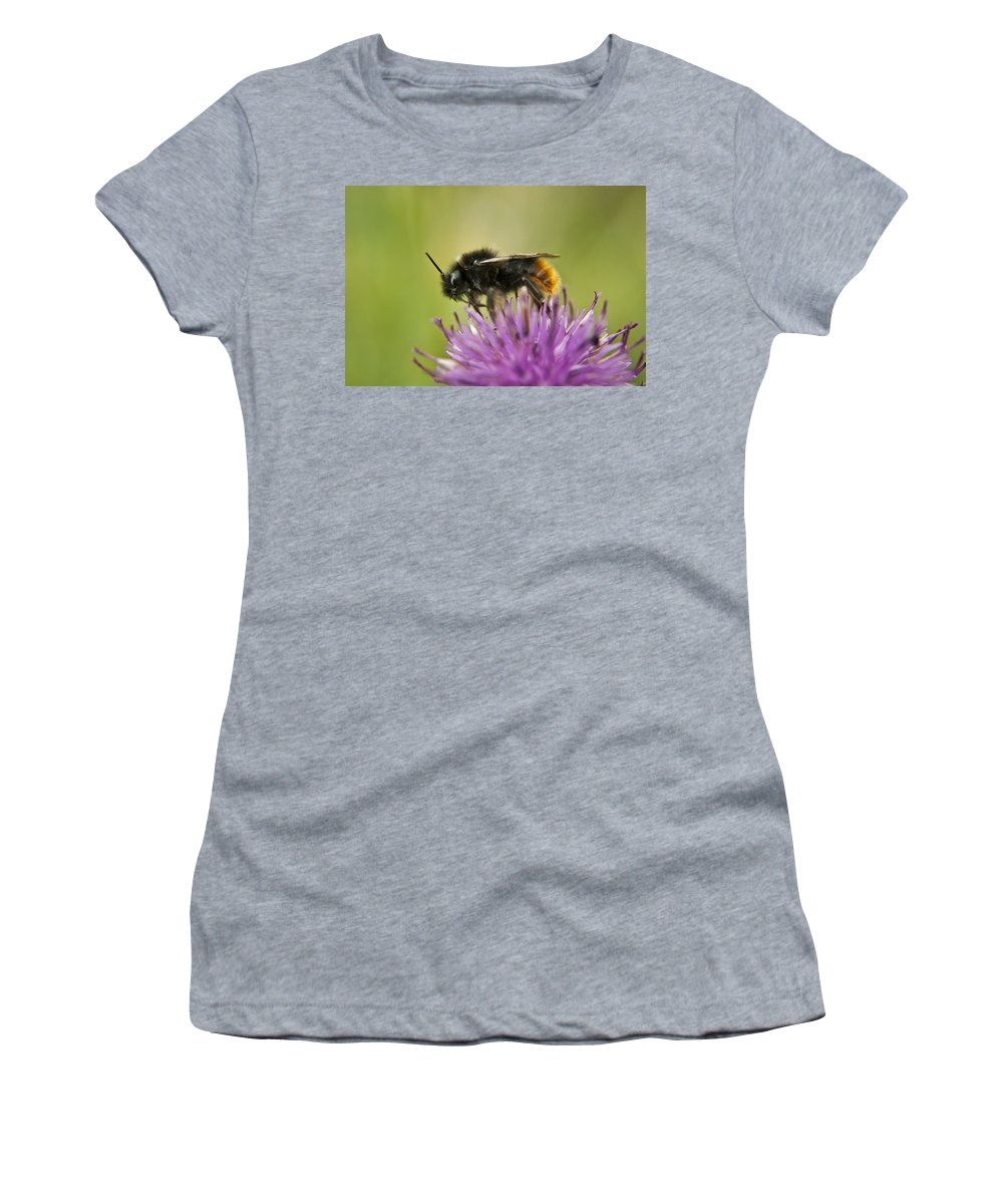 Bee Women's T-Shirt featuring the photograph Bee I by Vicki Field