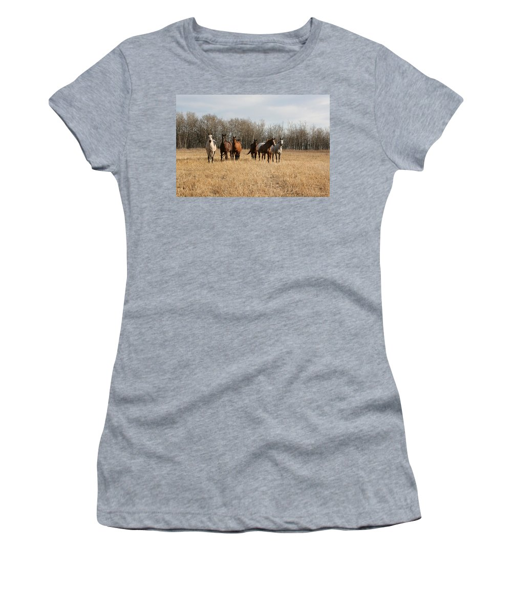 Horses Herd Animals Ranch Cowboy Appaloosa Quarter Horse Mares Pasture Field Grass Women's T-Shirt featuring the photograph Curious Horses by Andrea Lawrence