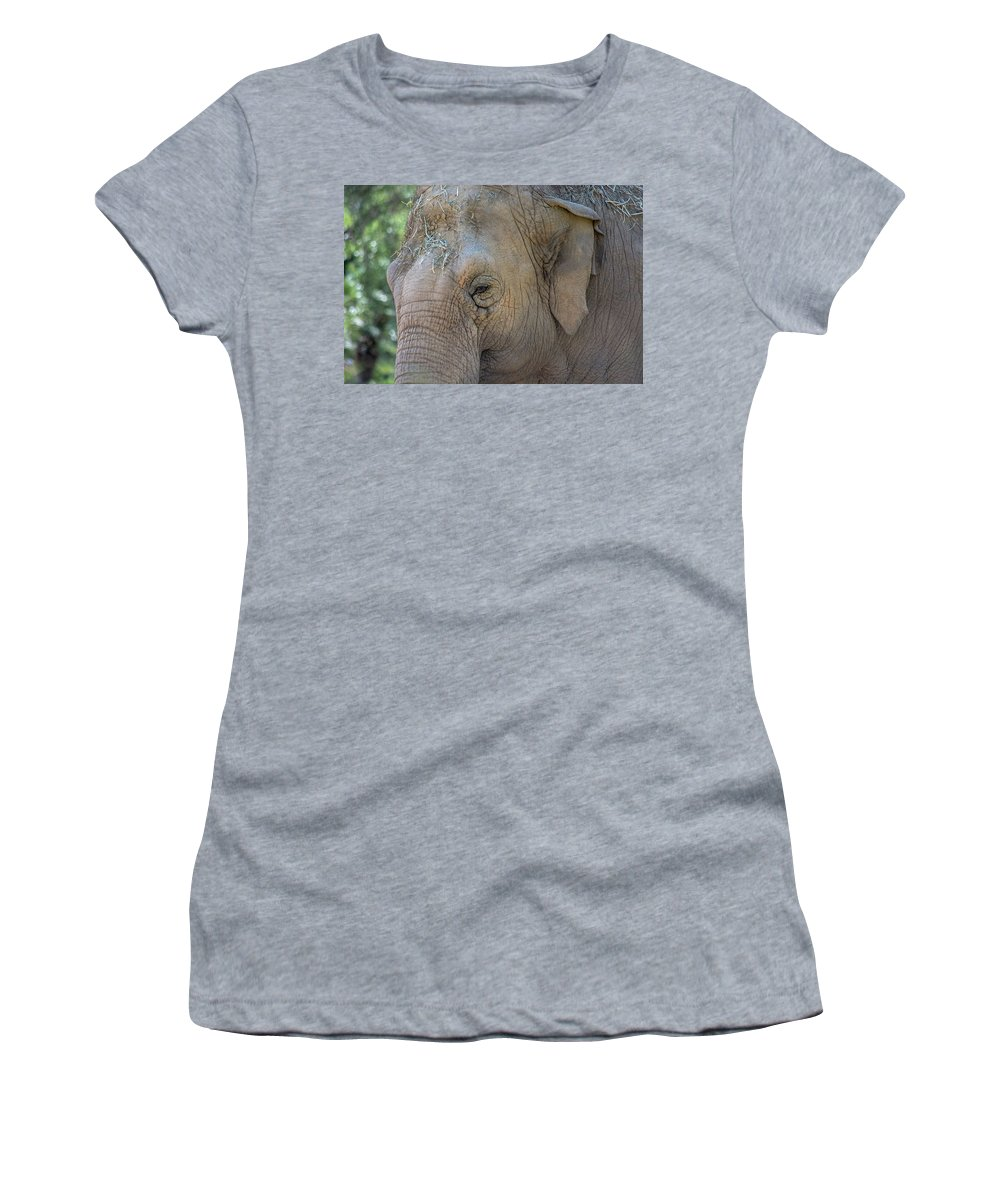 Elephant Women's T-Shirt (Athletic Fit) featuring the photograph Elephant by Jay Billings