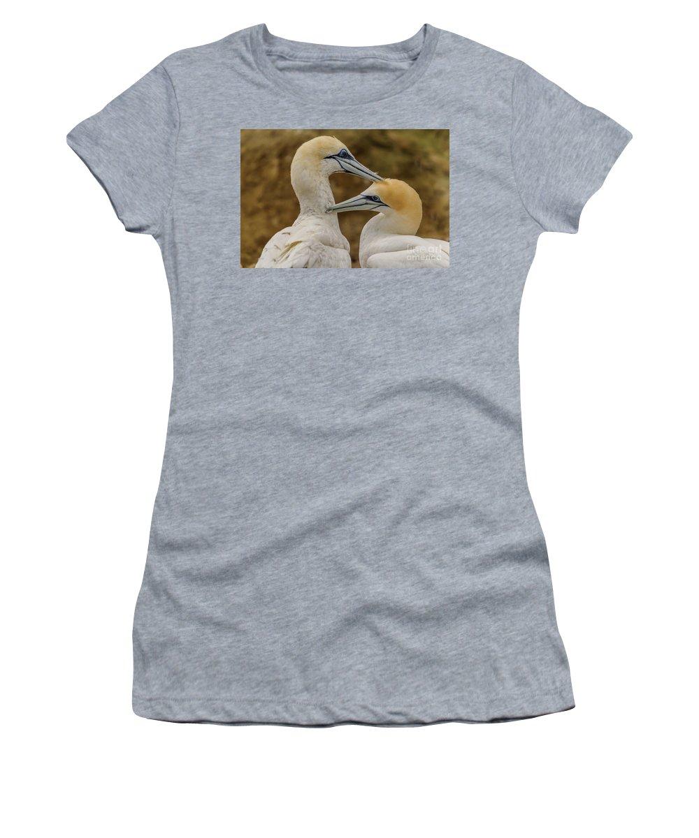 Gannet Women's T-Shirt featuring the photograph Gannets 4 by Werner Padarin