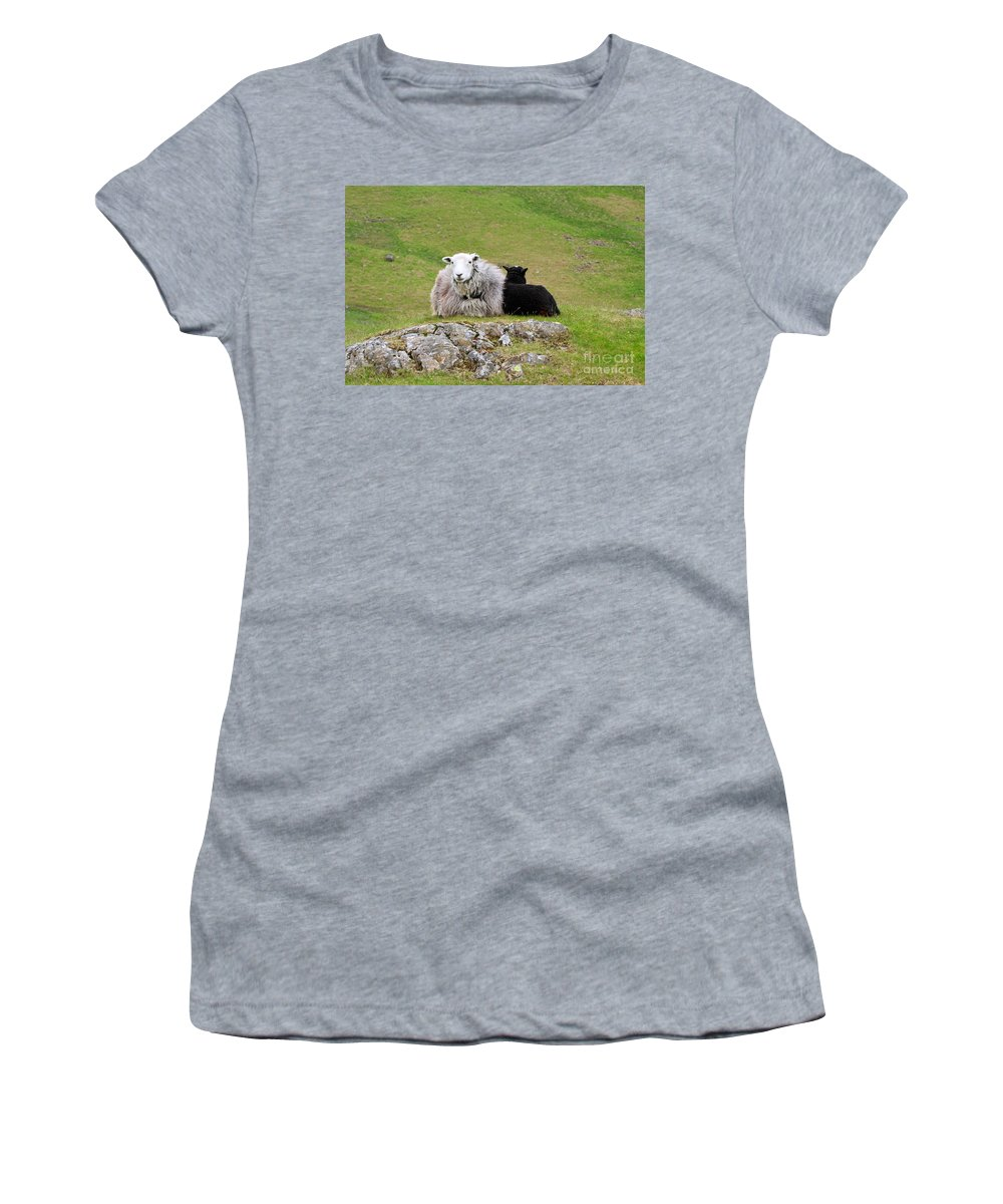 Sheep Women's T-Shirt (Athletic Fit) featuring the photograph Herdwick Sheep On A Hillside In Cumbria by Louise Heusinkveld