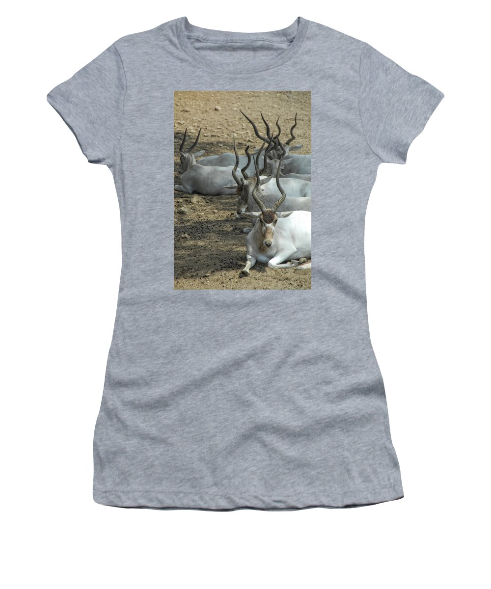 Addax Women's T-Shirt (Athletic Fit) featuring the photograph Horney by Donna Blackhall