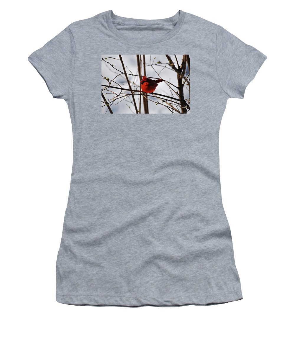 Cardinal Women's T-Shirt (Athletic Fit) featuring the photograph I'm Feeling Rather Red Today by Lori Tambakis