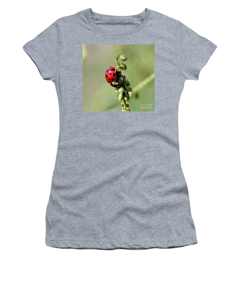 Landscape Women's T-Shirt (Athletic Fit) featuring the photograph Lady Beetle by David Lane