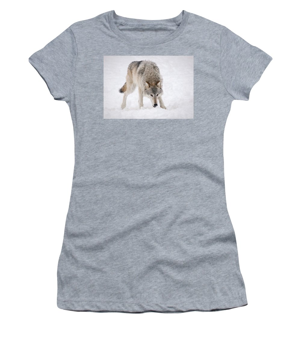 Wolf Women's T-Shirt (Athletic Fit) featuring the photograph Leary Wolf Style by Athena Mckinzie